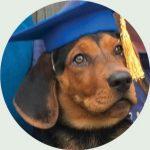 ann bechnel companion dogs puppy grad
